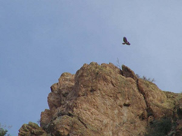 Hawk Over Rock